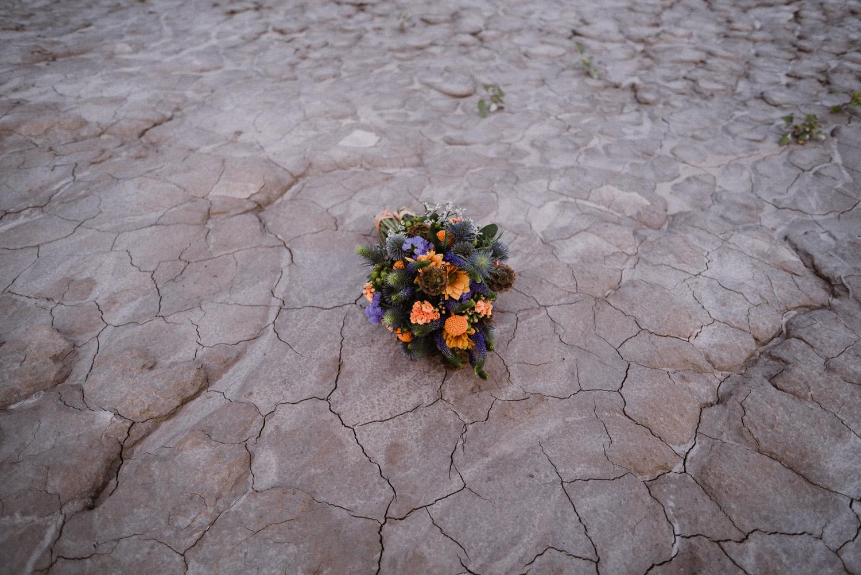 Ramo del desierto